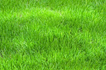 green grass photo