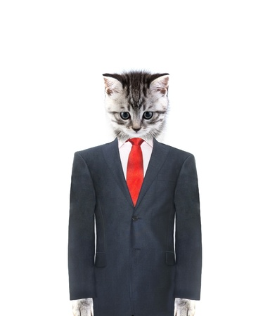 suit coat: Cat in a suit on a white background