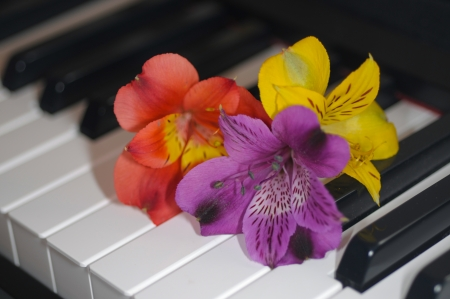 fower on piano photo