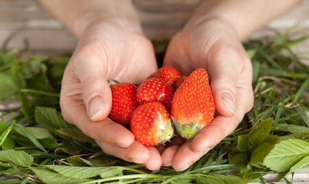 ripe strawberries in the palms of your hands close up Banque d'images