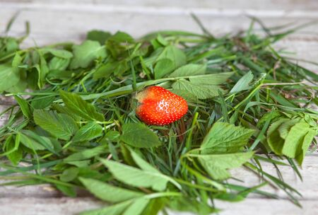 fresh strawberries in green grass on a wooden table Banque d'images