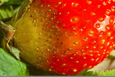 fresh strawberries macro photography, close-up,artificial grain,small DOF