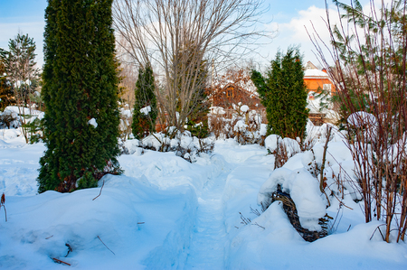 beautiful winter snowy garden view  in sunny cold day