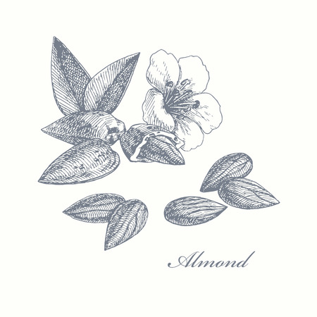 Amande. main illustration dessinée avec des noix, des feuilles et des fleurs