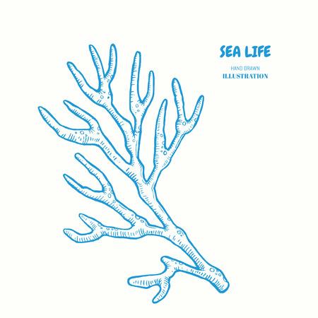 サンゴの小枝。ロゴベクトルの手には、図が描画されます。ビンテージの海洋海ライフ スケッチ