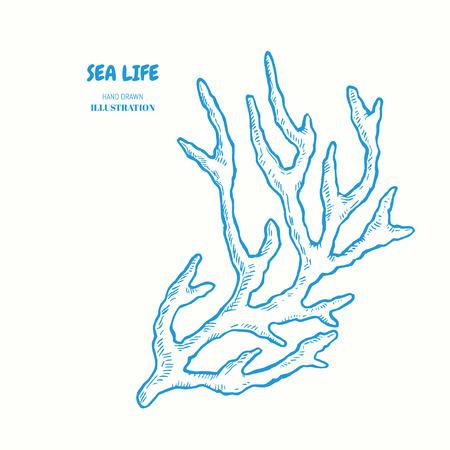 Sprig of coral. Vector hand drawn graphic illustration. Vintage marine sea life sketch