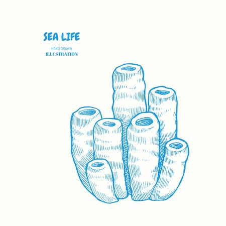 Sea sponge. Vector hand drawn graphic illustration. Vintage marine sea life sketch 일러스트