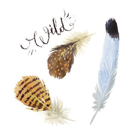 Set of watercolor feathers. Vector illustration Illustration