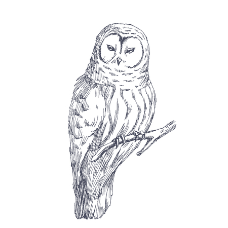 Owl sketch. Vector illustration of a bird isolated on white.