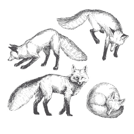 Vector hand drawn cute animal set. Sketch with walking, playing and sleeping foxes.