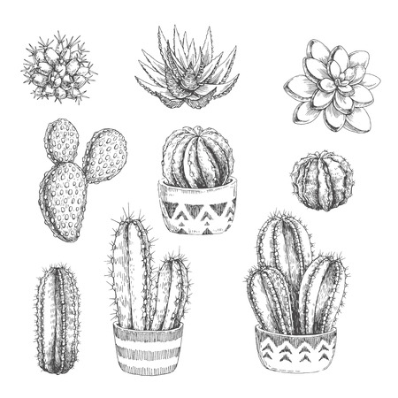 A Vector set of houseplants. Vintage hand drawn illustrations with cactus and succulents in engraving style. Sketches of floral objects isolated on white background Ilustração