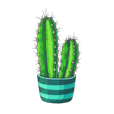 Vector sketch of houseplant. Vintage hand drawn illustration of cactus in pot with ethnic ornament isolated on white.