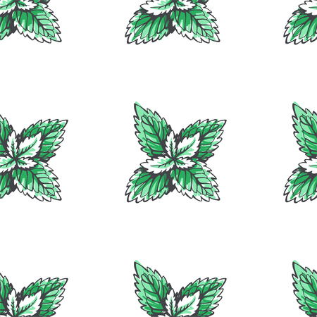 Vector seamless pattern with mint leaves. Botanical hand drawn illustration of herb. Floral texture Illustration
