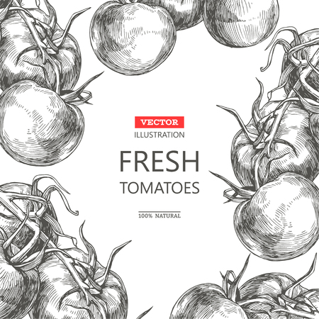 Vector vintage botanical background with fresh vegetables isolated on white. Card template with hand drawn tomatoes. Ilustração