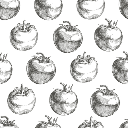 Vector seamless pattern with sketch tomatoes isolated on white. Ilustração