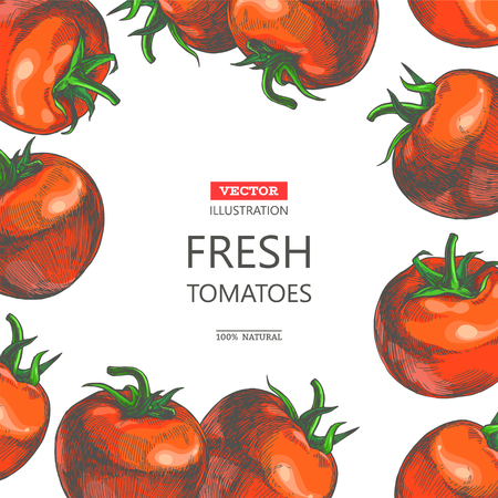Vector vintage botanical background with fresh vegetables isolated on white. Card design with hand drawn red tomatoes in engraving style.