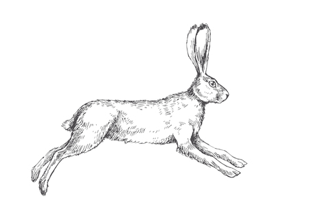 Vector vintage illustration of running hare isolated on white. Hand drawn jumping rabbit in engraving style.