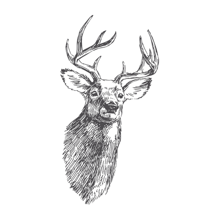 Vector vintage deer head in engraving style. Hand drawn illustration with animal portrait isolated on white. Reklamní fotografie - 114761643