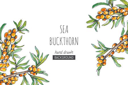 Fond floral de vecteur avec des branches d'argousier dans le style de croquis. Illustration botanique dessinée à la main avec des baies fraîches isolées sur blanc.