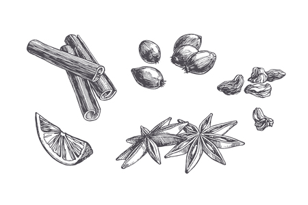 Vector vintage set of spices and sweets isolated on white. Hand drawn illustration of cinnamon, cardamom and berries in engraving style.