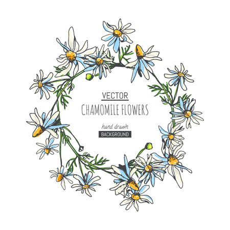 Vector floral pattern with chamomile branches. Hand drawn botanical texture with field plants. Floral sketch with camomile flowers. Иллюстрация