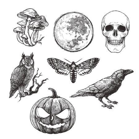 Insieme dell'annata di vettore dei simboli di Halloween in stile incisione. Illustrazione disegnata a mano con teschio, zucca, luna piena, corvo, falena testa di morte e gufo.