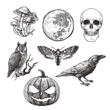 Vector vintage set of Halloween symbols in engraving style. Hand drawn illustration with skull, pumpkin, full moon, raven, death head moth and owl.