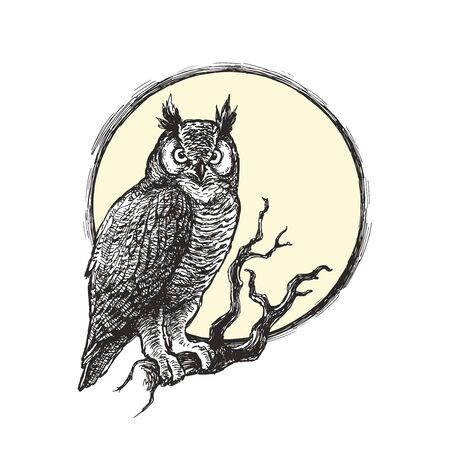 Vector vintage gothic illustration with owl sitting on dry branch. Bird on tree and full moon background. Halloween symbol in engraving style.