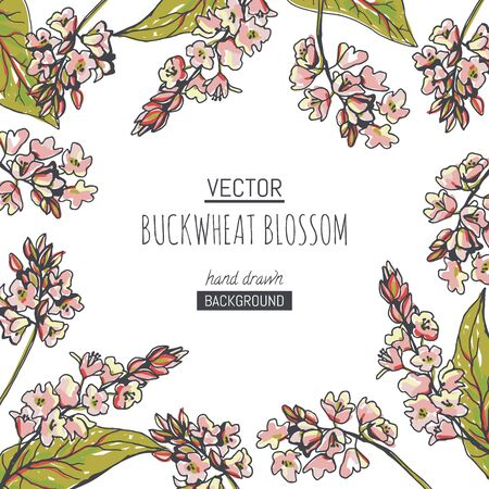 Vector background with buckwheat blossom. Hand drawn botanical illustration with pink flowers and handful of grains in sketch style.