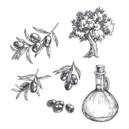 Vector vintage olive set. Hand drawn illustrations of tree, branches with leaves and black fruits and bottle of oil in engraving style. Sketch with plants and pitcher. Ilustración de vector