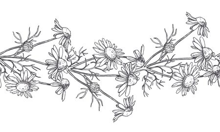 Vector seamless pattern with chamomile flowers in engraving style. Hand drawn botanical texture with floral border. Camomile sketch Vectores