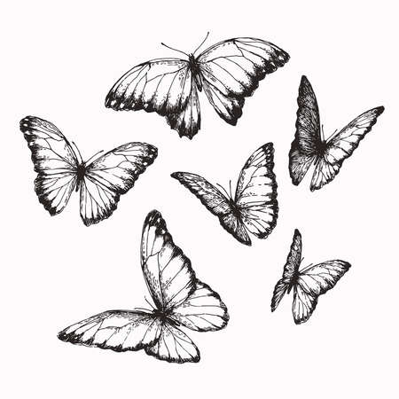 Vector vintage set of butterflies with different positions of wings in engraving style. Hand drawn illustration of nymphalid.