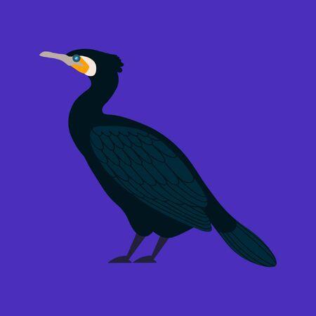 Vector illustration of cormorant bird in a flat style. Atlantic seabird. Cartoon style Illustration