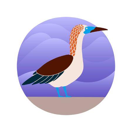 Vector illustration of booby bird in a flat style. Atlantic seabird. Cartoon style