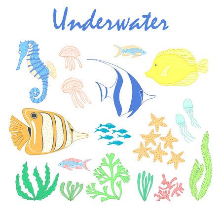 Set of underwater design elements. Sea fish. Vector design elements: sea fishes, corals and seaweeds. Underwater set. Sea life design elements.Set of sea animals. Underwater vector set. Sea fish set.