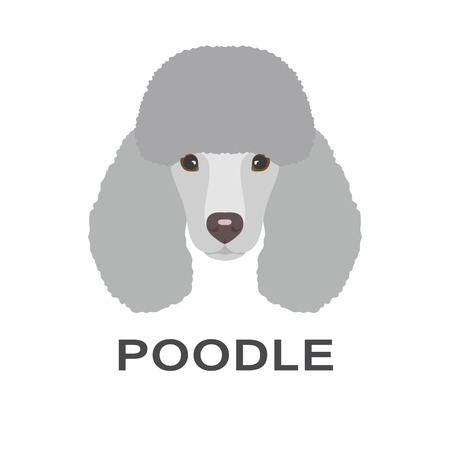Vector illustration of poodle in flat style. Poodle flat icon. Vettoriali