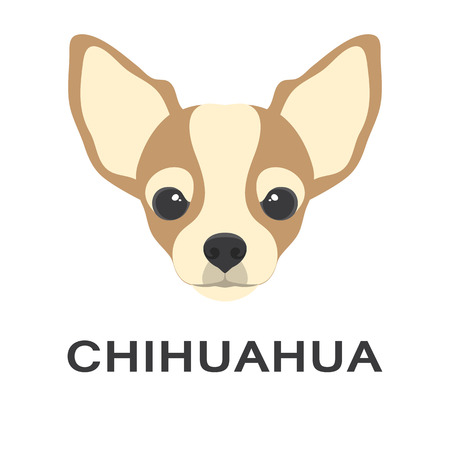 Vector illustration og chihuahua dog in flat style. Chihuahua flat icon. Vectores