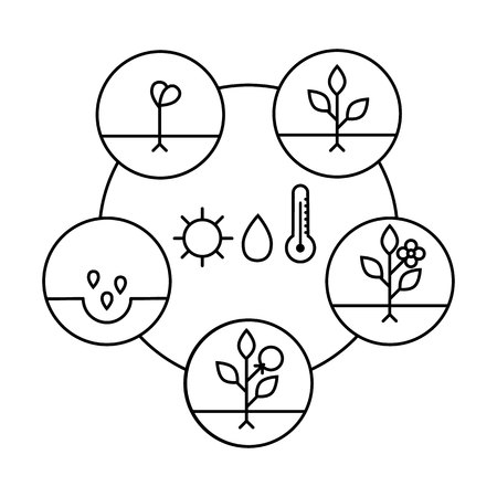 Plant growth stages. Line art icons. Linear style illustration  isolated on white.  Planting fruits, vegetables process. Flat design style.