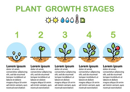 Plant growth stages infographics. Line art icons. Linear style illustration isolated on white. Planting fruits, vegetables process. Flat design style.