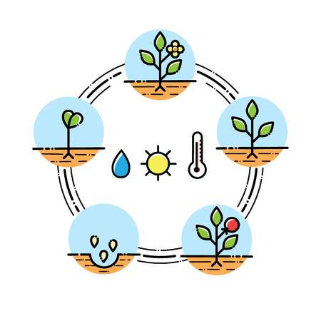 Plant growth stages infographics line art icons linear style illustration isolated on white planting fruits, vegetables process.