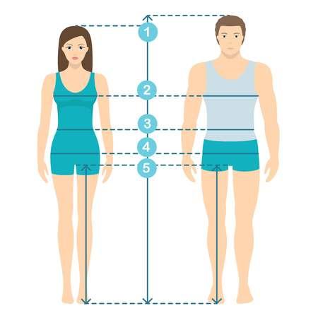 Ilustração vetorial de homem e mulher em comprimento total com linhas de medição de parâmetros corporais. Medições de tamanho de homem e mulher. Medições e proporções do corpo humano. Design plano.