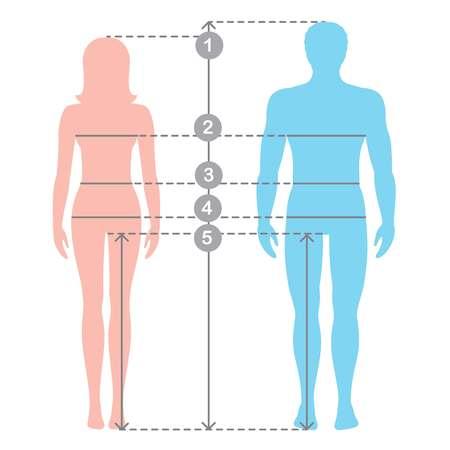 Sylwetki mężczyzny i kobiety w pełnej długości z liniami pomiarowymi parametrów ciała. Pomiary mężczyzn i kobiet. Ilustracja kreskówka wektor zapasów. Wymiary i proporcje ludzkiego ciała.