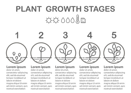 Plant growth stages infographics line art icons set on white background.