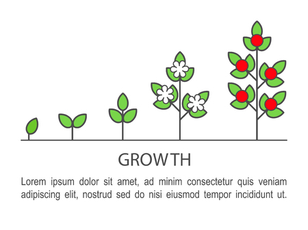Plant growing process infographics. Growth concept line art icons.