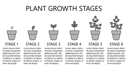 Plant growth stages infographics. Line art icons. Planting instruction template. Linear style illustration isolated on white. Planting fruits, vegetables process. Flat design style. Stock Vector - 101580505