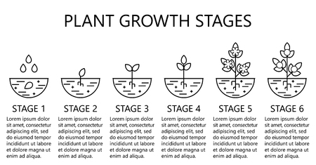 Plant growth stages infographics. Line art icons. Planting instruction template. Linear style illustration isolated on white. Planting fruits, vegetables process. Stock Vector - 101615924