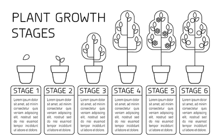 Plant growth stages infographics. Line art icons. Planting instruction template. Linear style illustration isolated on white. Planting fruits, vegetables process. Stock Vector - 101601630
