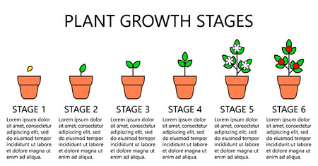 Plant growth stages infographics. Line art icons. Planting instruction template. Linear style illustration isolated on white. Planting fruits, vegetables process. Flat design style. Stock Vector - 101685627