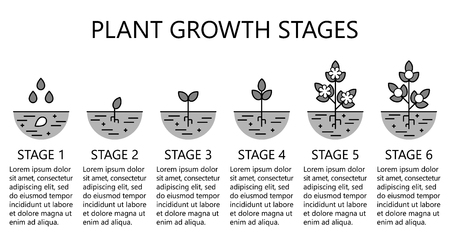 Plant growth stages info graphics. Monochrome line art icons. Planting instruction template. Linear style illustration isolated on white. Planting fruits, vegetables process. Flat design style.
