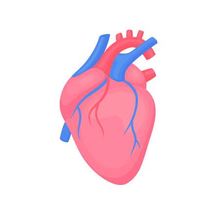 Cardiology diagnostic center sign. Human contoured heart flat design. Medical science anatomy illustration. Çizim